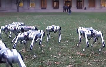 Відэахіт: Мноства робатаў-сабак гуляюць у футбол і робяць сальта ў парку