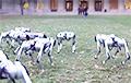 Видеохит: Множество роботов-собак играют в футбол и делают сальто в парке