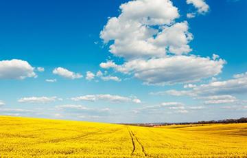 В Украине нашли 1,5 миллиона гектар «ничейной» земли