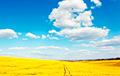 У Зеленского рассказали, сколько украинской земли осталось в госсобственности