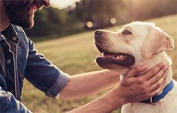 Ученые: Собаки «понимают» произносимые человеком слова лучше, чем предполагалось