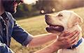 Ученые: Собаки понимают человеческий язык лучше, чем мы думали
