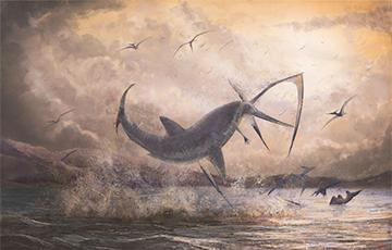 Навукоўцы адкрылі новы від акулы