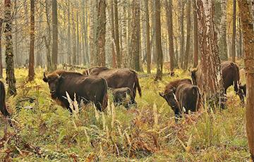 Беловежская пуща вошла в топ путешествий от National Geographic