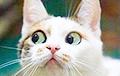 Ученые: У кошек есть мимика