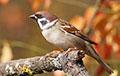 Ученые рассказали, как изменились птицы из-за потепления