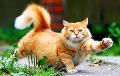 Что общего у кота с похмельем?