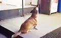 Видеохит: пес-«певец» из Украины стал звездой сети