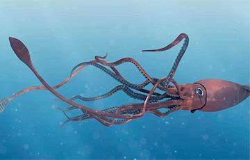 Океанолог рассказал, где на самом деле живут кракены