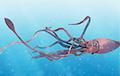 Ученые расшифровали геном загадочного гигантского кальмара