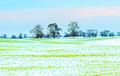 Белорусский фермер объяснил, опасна ли теплая зима для будущего урожая