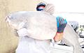 В американском озере поймали рыб-гигантов