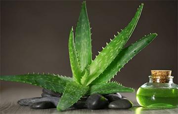 Названы комнатные растения, рядом с которыми обеспечен крепкий и здоровый сон