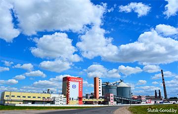 Сахарные заводы в Беларуси простаивают?
