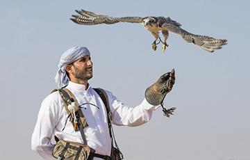 У катарцаў ёсць жаданне пачаць сакалінае паляванне пад Капылём