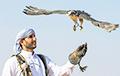 Катарцы хотят начать соколиную охоту под Копылем
