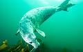 Видеохит: Тюлени «хлопают в ладоши» под водой