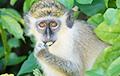Видеохит: В Харькове зеленая обезьяна позабавила посетителей торгового центра
