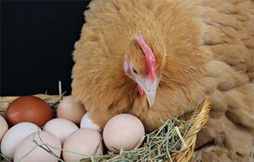 Ученые выяснили, что было раньше - яйцо или курица