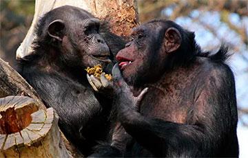 Ученые: Общение животных подчиняется законам языка