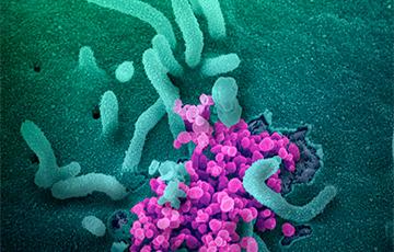 У ЗША вакцыну ад каранавіруса пачалі выпрабоўваць на людзях