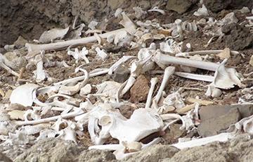 Ученые обнаружили древнюю цивилизацию на Канарских островах