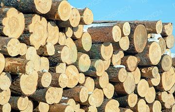 Китайские банки стали лидерами по спонсированию вырубки лесов за рубежом