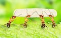 Муравьи в качестве домашних питомцев: новый тренд завоевывает мир