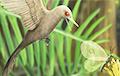 Зубастый «динозавр-колибри» оказался древней ящерицей