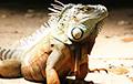 Ученые обнаружили новый вид «драконов»