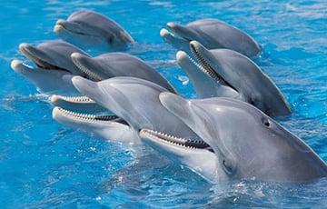 Ученые: Дельфины заводят только «выгодных» друзей