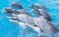 Ученые рассказали, что дельфины умеют петь дуэтом