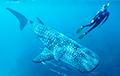 Ученые рассказали, сколько живут крупнейшие рыбы современности