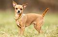 Ученые рассказали, какие собаки были популярными в Древнем Риме