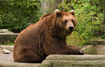 Видеофакт: В Варшавском зоопарке пьяный посетитель пытался утопить медведя