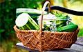 Диетологи назвали пять лучших блюд из кабачков