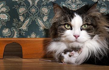 Археозоологи выяснили, когда у европейцев завелись мыши и кошки