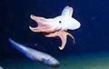 Ученые сфотографировали осьминога на рекордной глубине