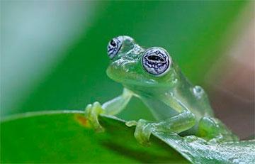 Биологи открыли новый вид естественного камуфляжа