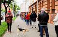 Фотофакт: Домашние животные на пикетах в Гродно и Минске
