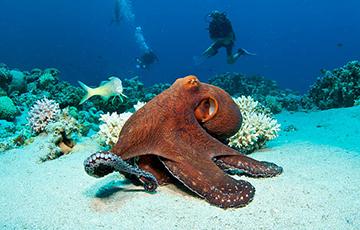 Ученые придумали, как с помощью осьминога сделать человека-невидимку