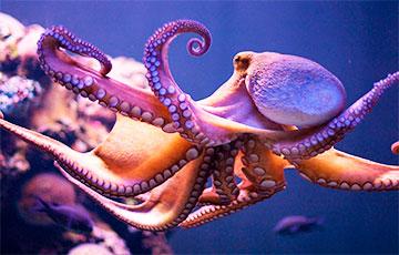 Ученые рассказали, как осьминоги воспитывают рыб