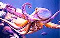 Ученые решили загадку необычного мозга у осьминогов