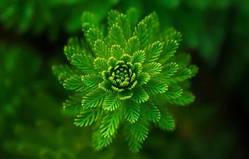 Ученые обнаружили у растений новый орган