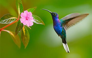 Ученые раскрыли секрет динозавра размером с колибри