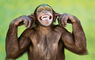 Ученые рассказали, есть ли у животных чувство юмора