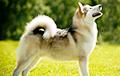 Ученые рассказали, каких собак предпочитали древние люди