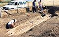 В Греции нашли дерево, которому 20 миллионов лет