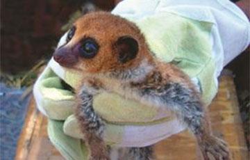 Ученые нашли новый вид животных