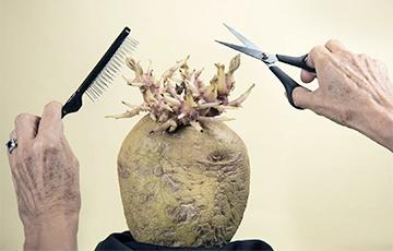 В Британии провели конкурс на лучшее фото картошки